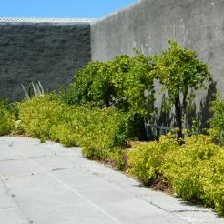President Mandela's garden